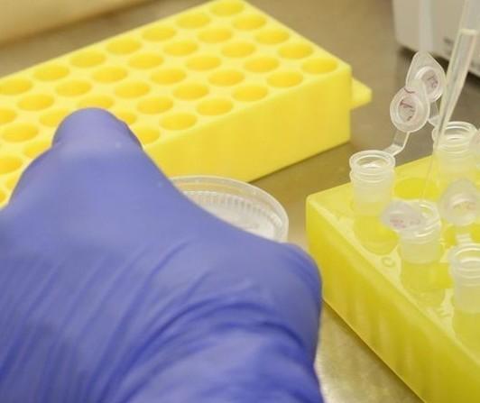 Nenhum caso novo de coronavírus foi confirmado nas últimas 24h