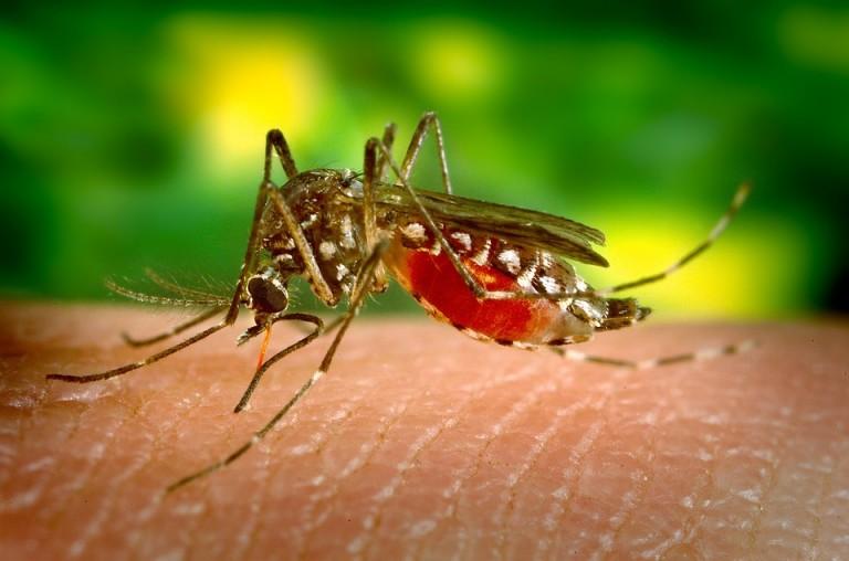 Maringá é a cidade com mais casos de dengue no Paraná