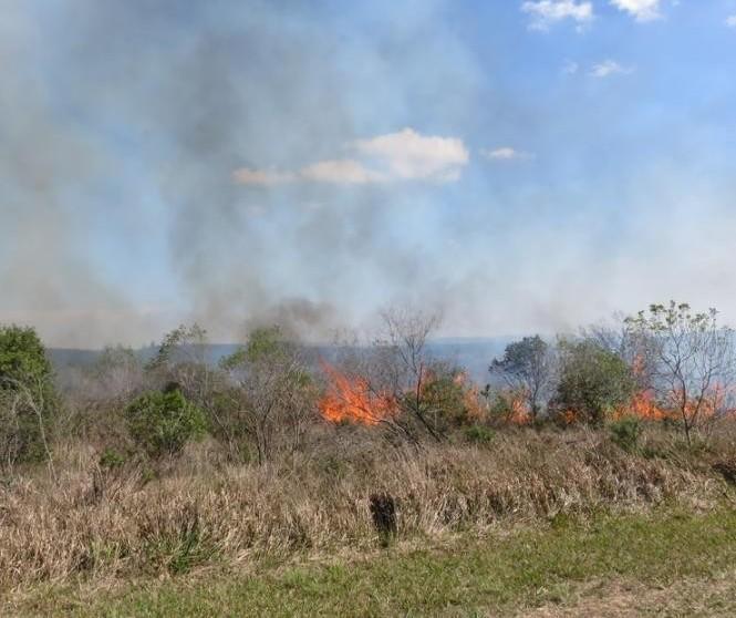 Bombeiros registram 267 incêndios ambientais este ano