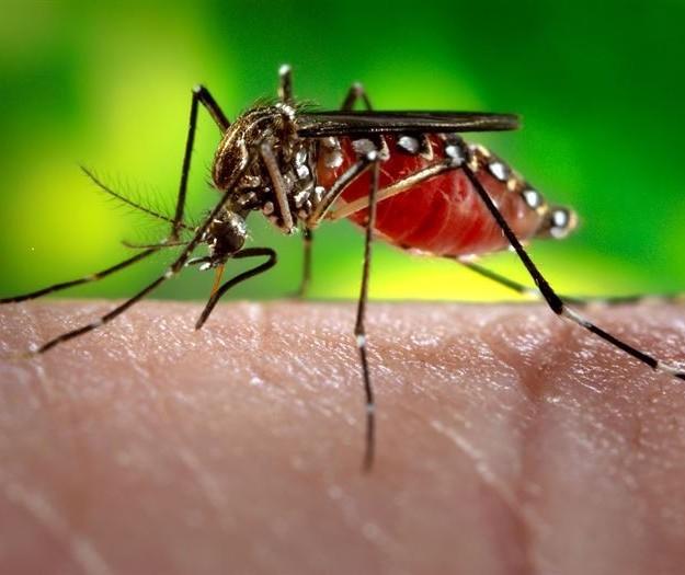 Paraná confirma primeiros casos de zika vírus
