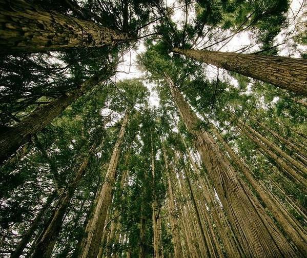 Florestas Plantadas geram estoque de 4,2 bi de gás carbônico