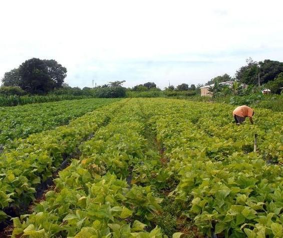 Seguro Rural terá subvenção de R$ 1 bilhão