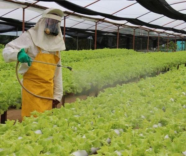 Crime organizado entra no contrabando de pesticidas