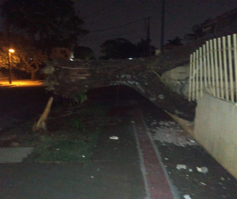 33 árvores caíram durante temporal em Maringá