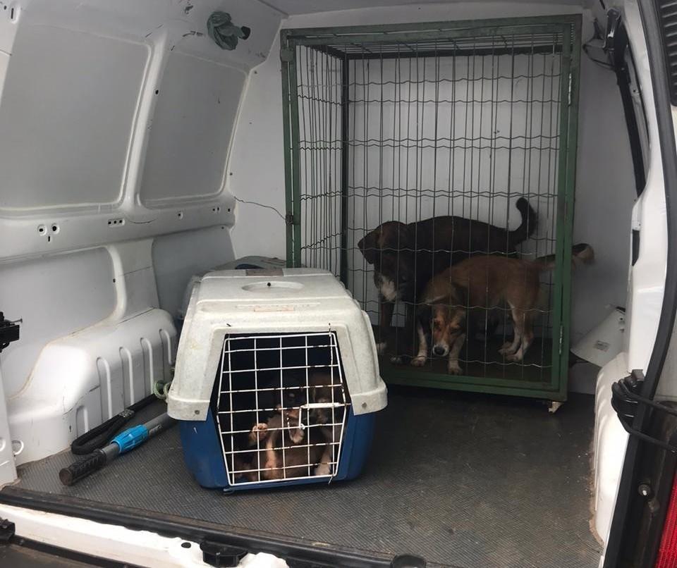 Dono de cães abandonados numa casa em Maringá será multado em R$14 mil