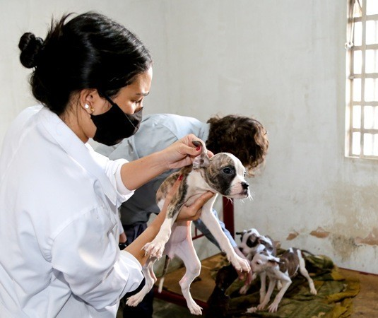 Morador de Maringá é multado em R$ 26 mil por maus-tratos a animais