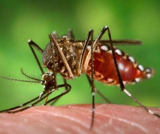 Sobe para cinco o número de mortes por dengue no Paraná