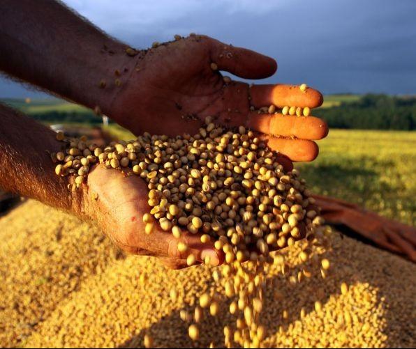 Saca da soja custa R$ 76 em Maringá