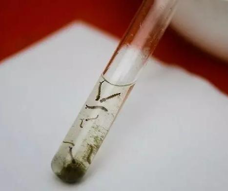 Maringá registra 116 novos casos de dengue em uma semana; total chega a 414