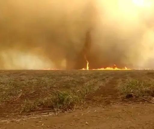Incêndio fora de controle está destruindo plantações na região de Maringá