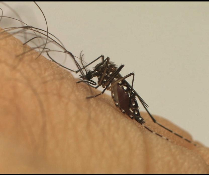 Em uma semana, Maringá registra três casos de dengue