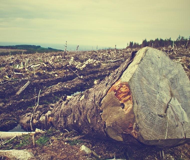 Ser humano é alterar a natureza