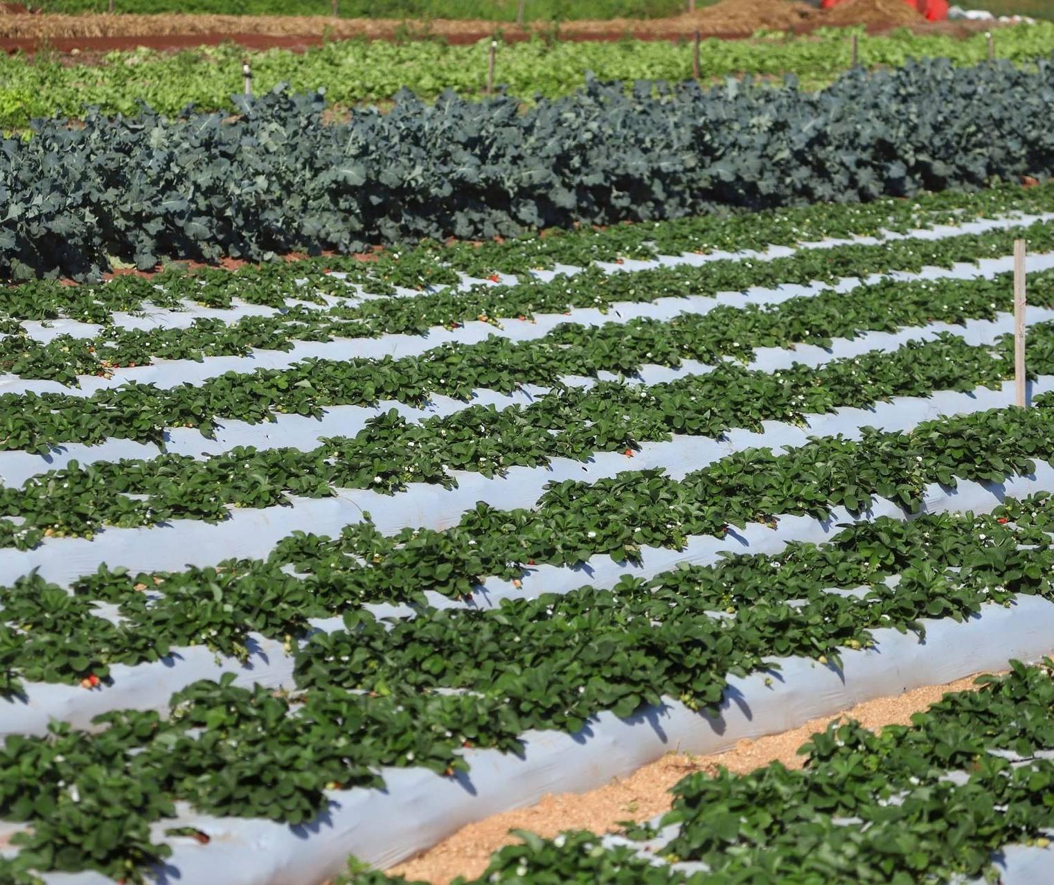 Plano Paraná Cooperativo 200 vai gerar mais de 80 mil empregos