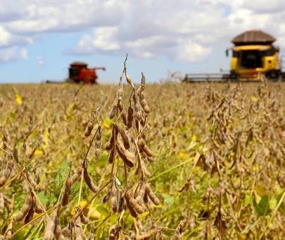 Produção de grãos na safra 2020/21 deve ser recorde de 268,67 milhões de toneladas