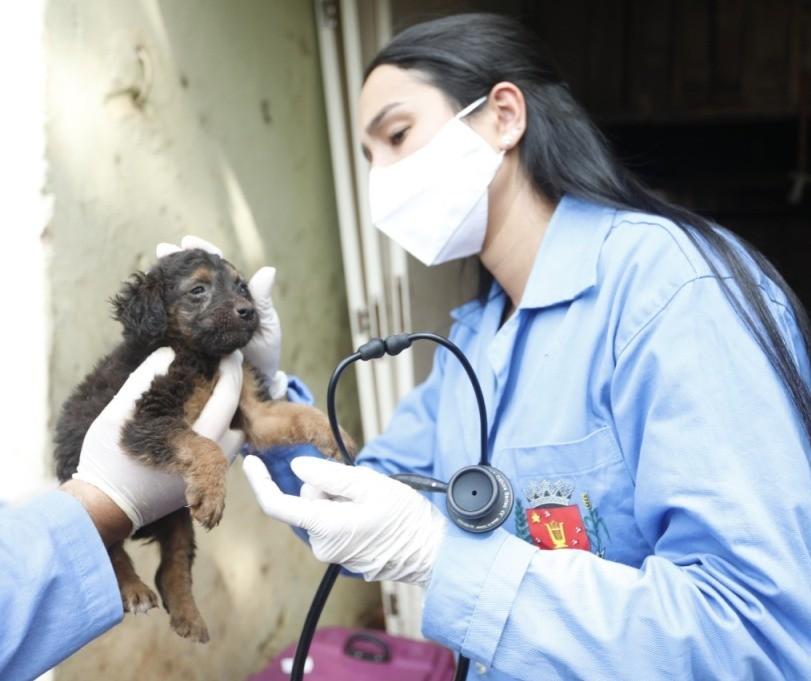 Homem é multado em R$ 20 mil por maus-tratos a cães em Maringá