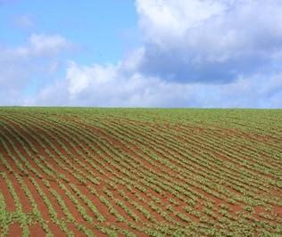 Adapar estende prazo para semeadura da soja