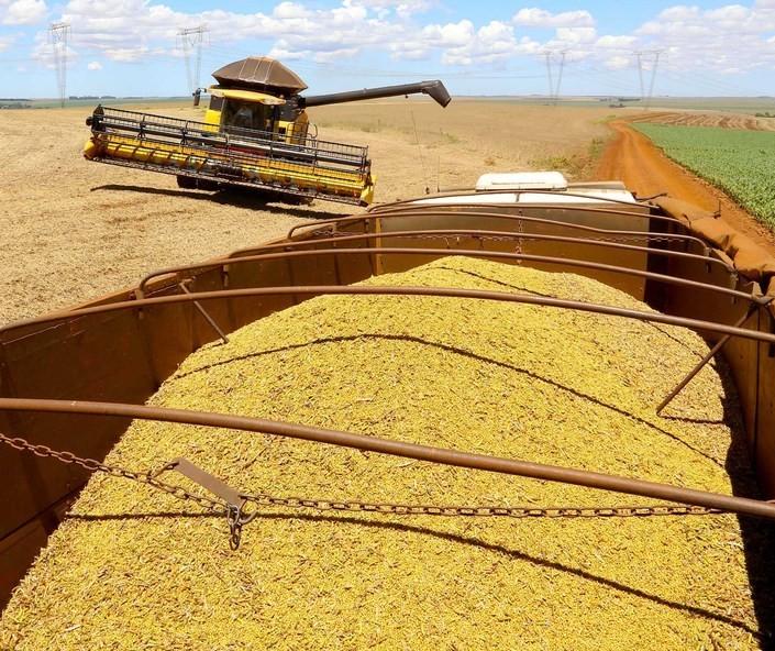 Safra de grãos de verão 2021/22 deve crescer 9% no Paraná