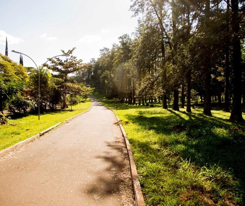 Benefícios da arborização urbana