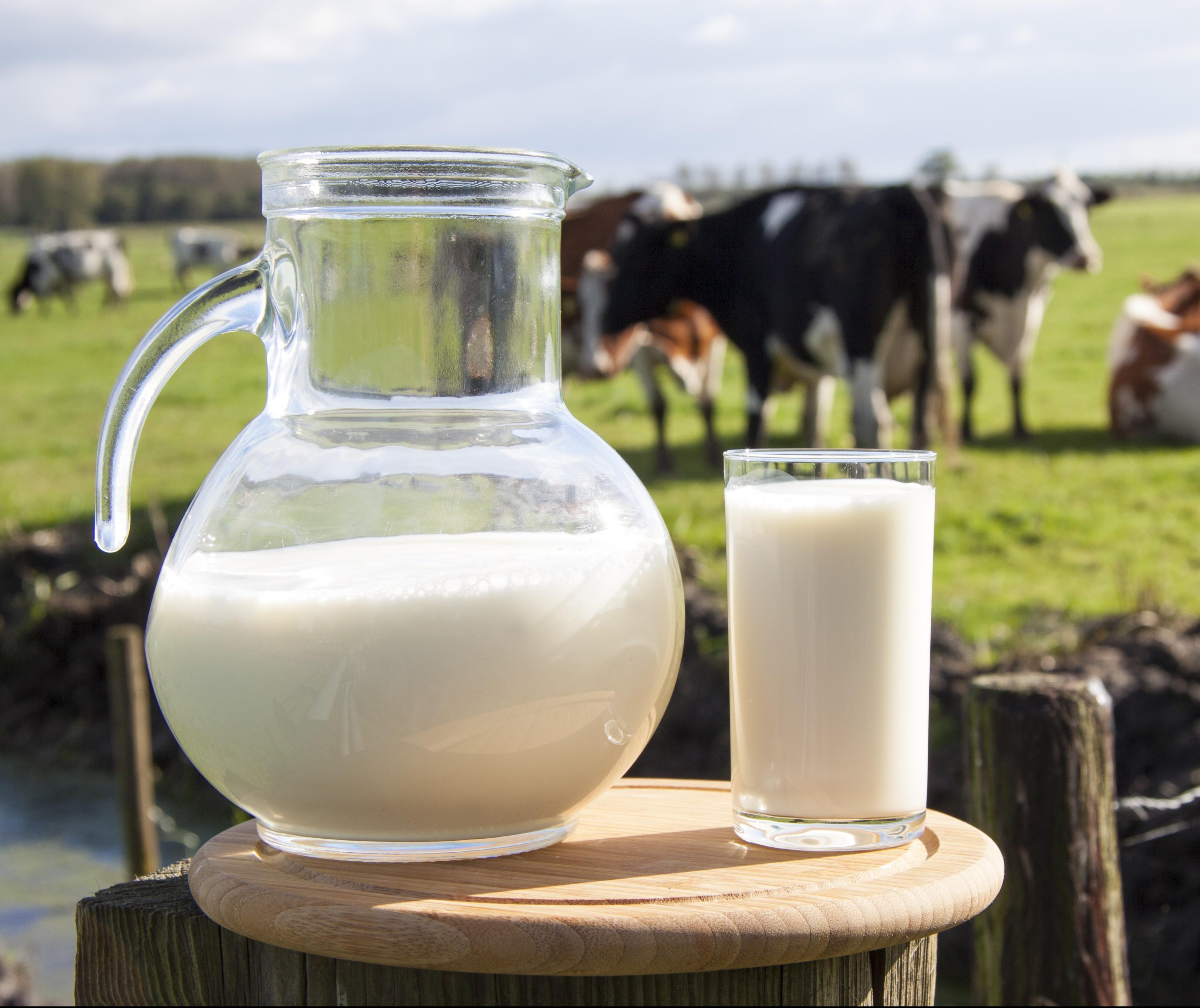 Custos da pecuária leiteira subiram 3,6% em 2019, em relação a 2018