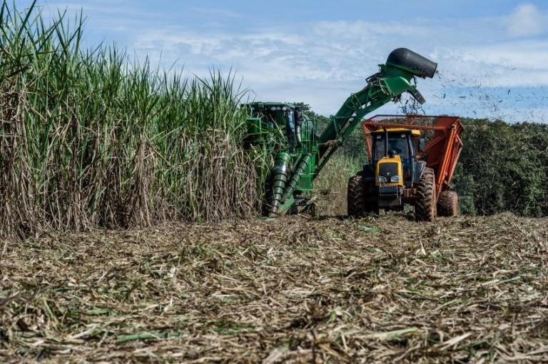 Paraná deverá ter menor produção de cana-de-açúcar na próxima safra
