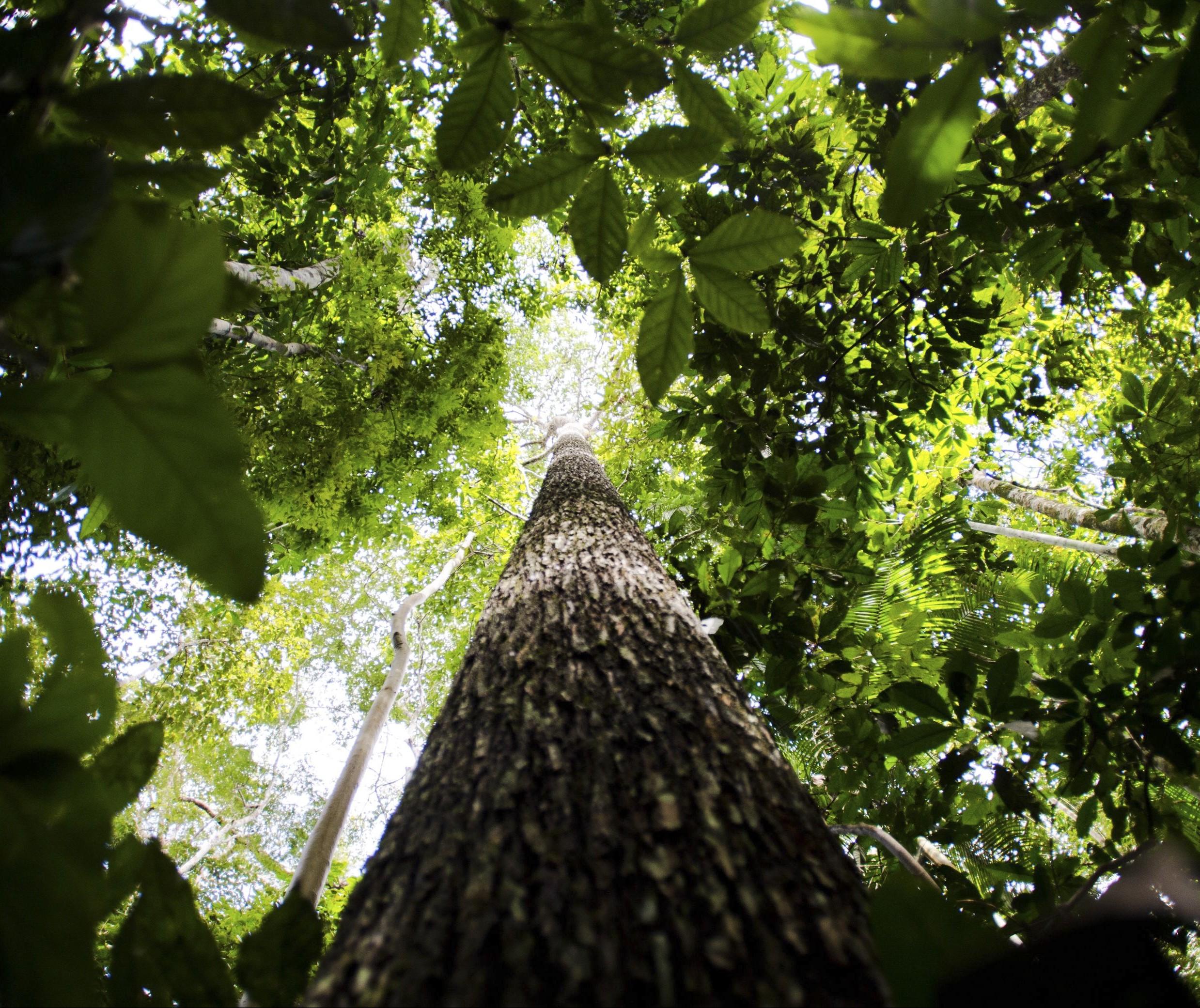 Área com florestas preservadas no Brasil corresponde a 66% do território nacional