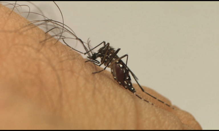 Maringá passa a considerar todos os casos de dengue como locais