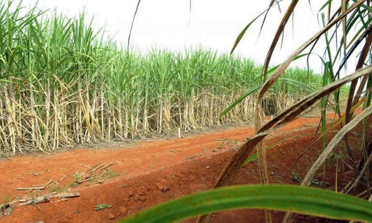 Projeções para próxima safra de cana-de-açúcar sofrem alterações