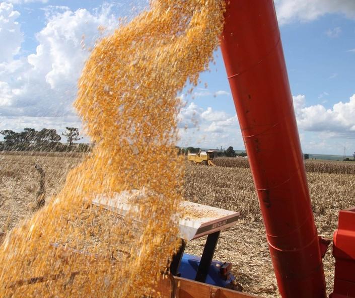 PR: Segunda safra de milho deve totalizar 9,8 mi de toneladas, diz Deral