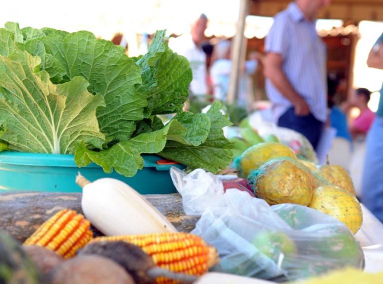 Como modernizar os conteúdos relacionados ao agro no ensino fundamental