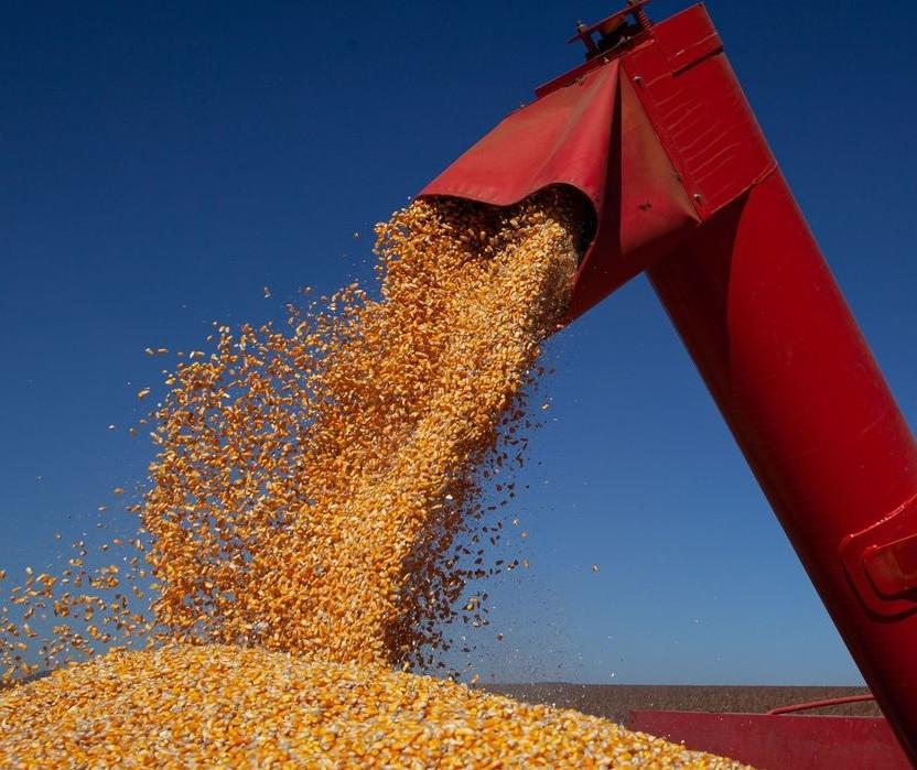 Chuva favorece desenvolvimento do milho no sul do Brasil
