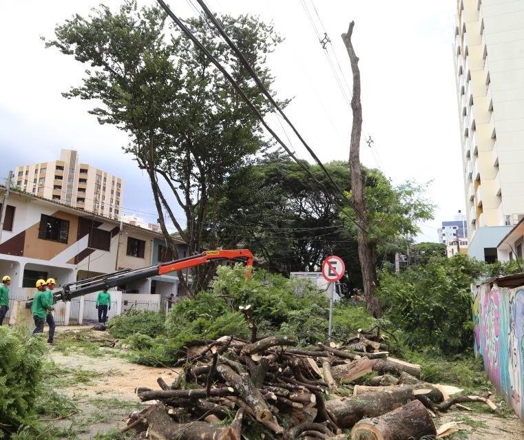 918 árvores precisam ser removidas com urgência ou emergência em Maringá