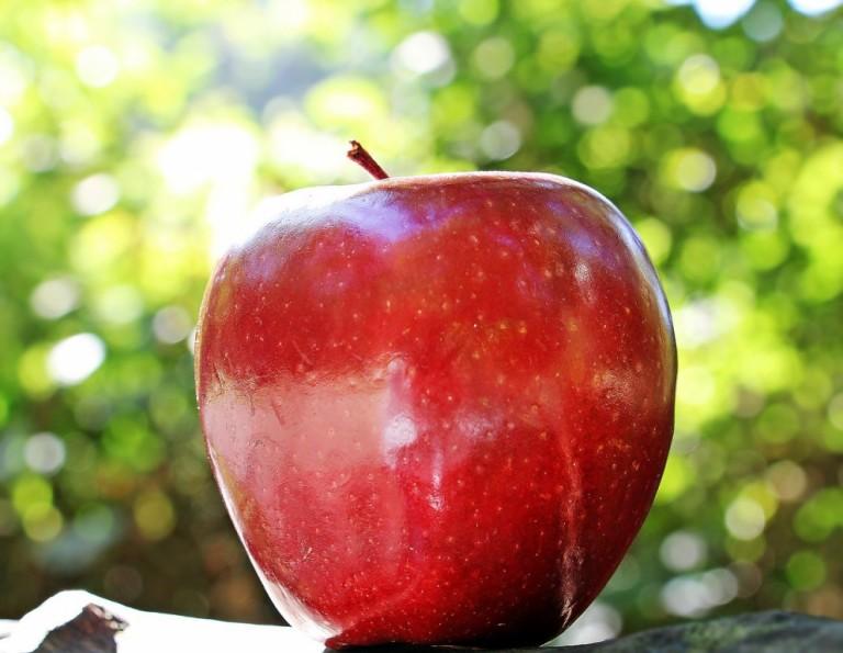 Produtores de maçã no Paraná devem ter ano produtivo