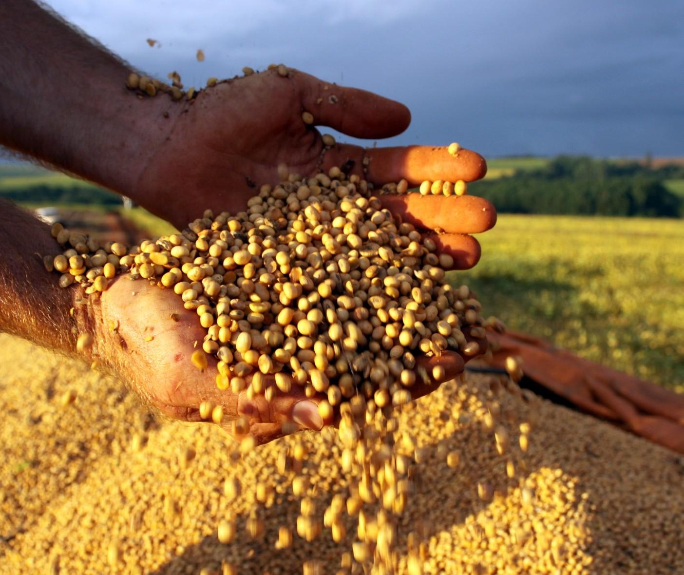 Preços da soja para o produtor paranaense continuam em patamares altos