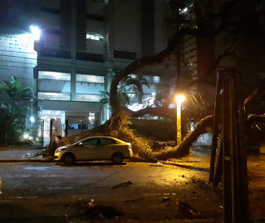 Temporal derruba pelo menos 20 árvores em Maringá