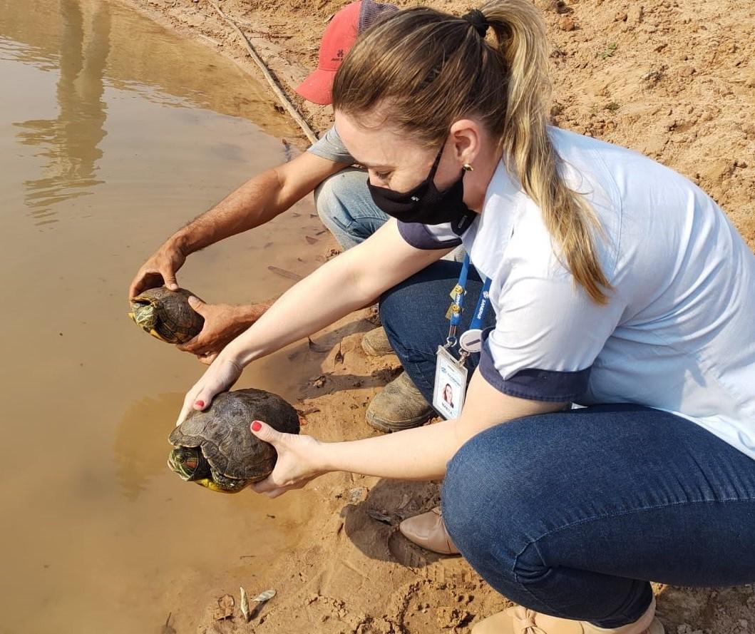Tartarugas que viviam em lagoa de tratamento da Sanepar são resgatadas
