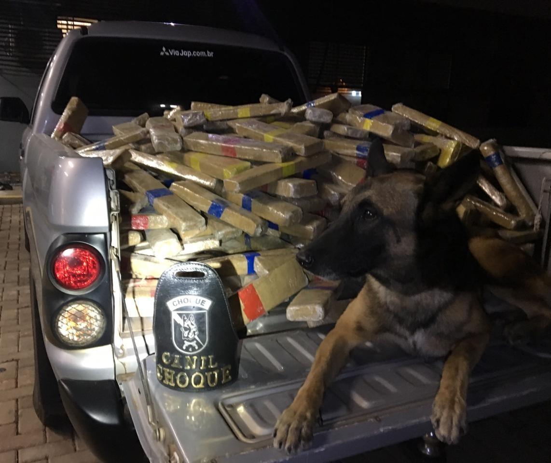 Caminhoneiro é preso transportando 600 quilos de maconha
