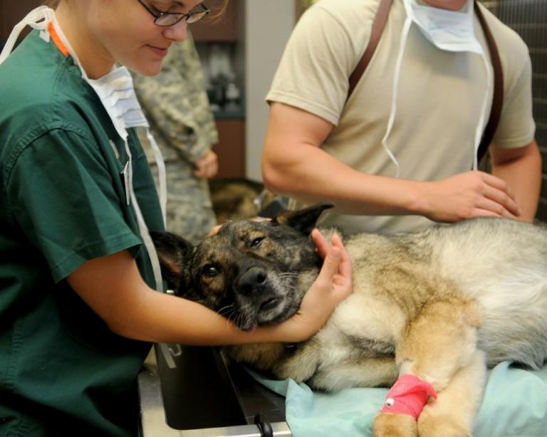 No Dia Mundial da Saúde Bucal veterinários alertam: os dentes dos pets também precisam de cuidados