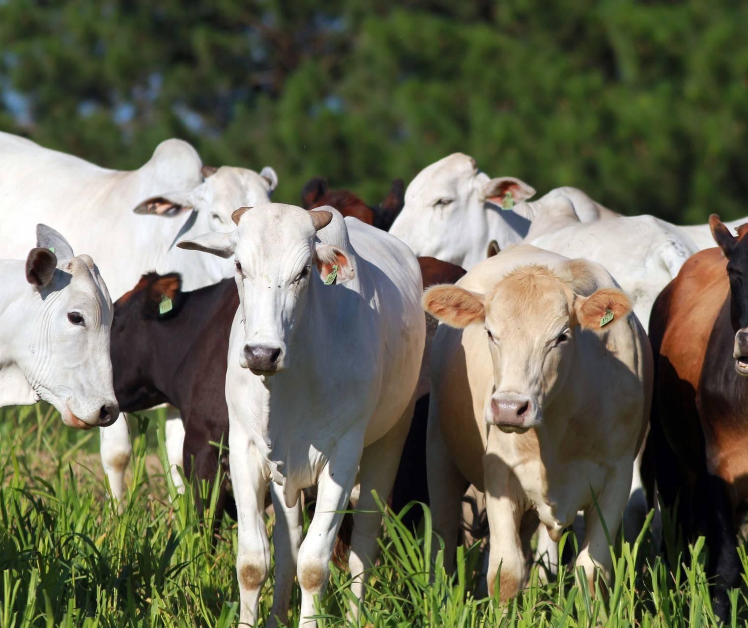 Brasil avança em importações de carne bovina para a China
