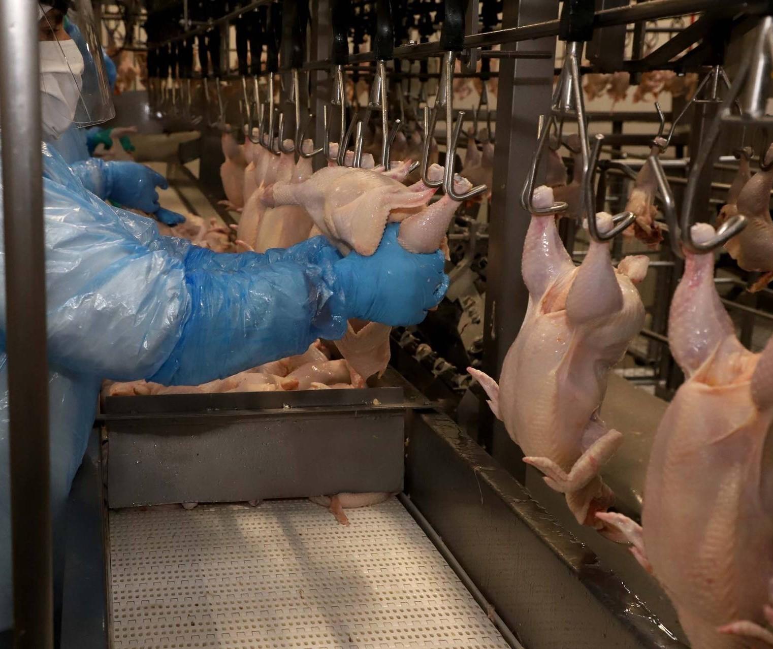 98,5% dos lares brasileiros consomem algum tipo de proteína animal