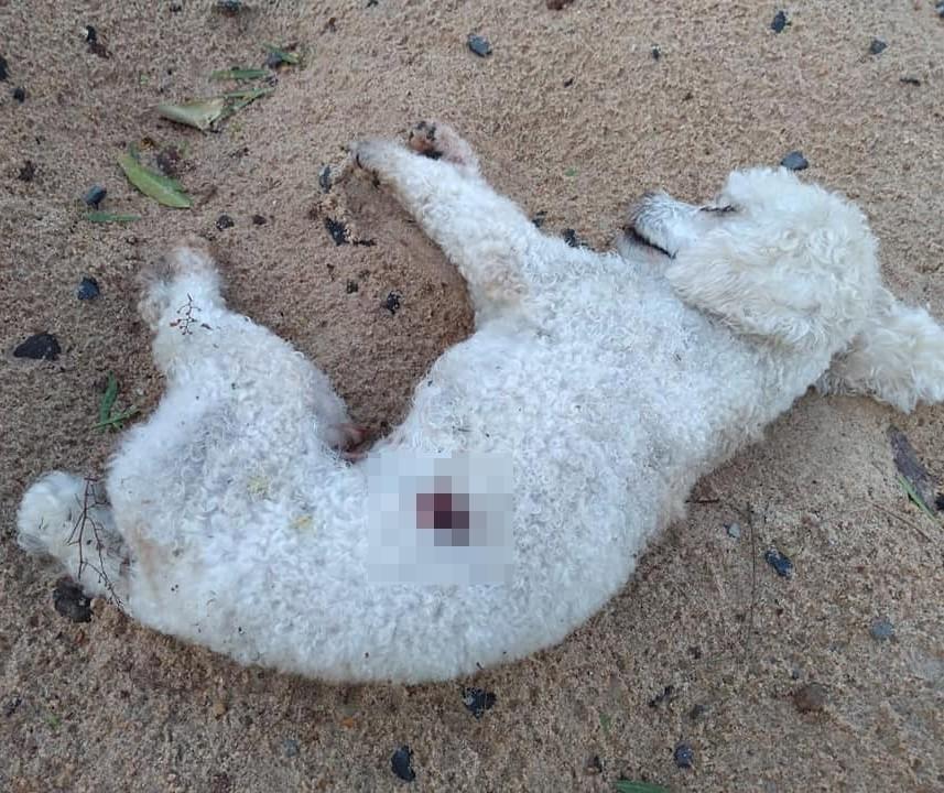 Autópsia confirma que cão encontrado morto foi alvo de tiro