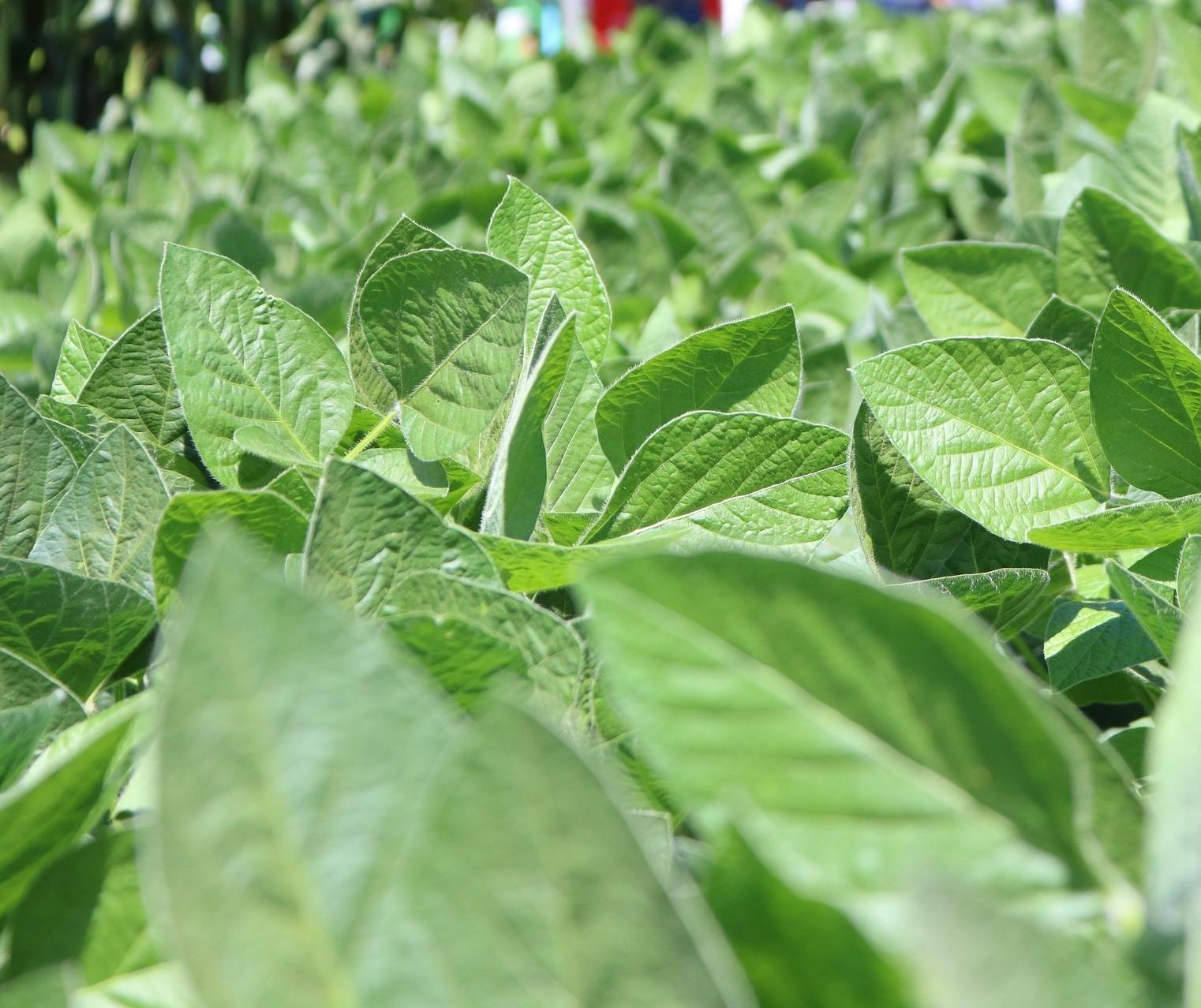 INTL FCStone estima consumo atenuado de fertilizantes em 2020 de 36,6 mi toneladas