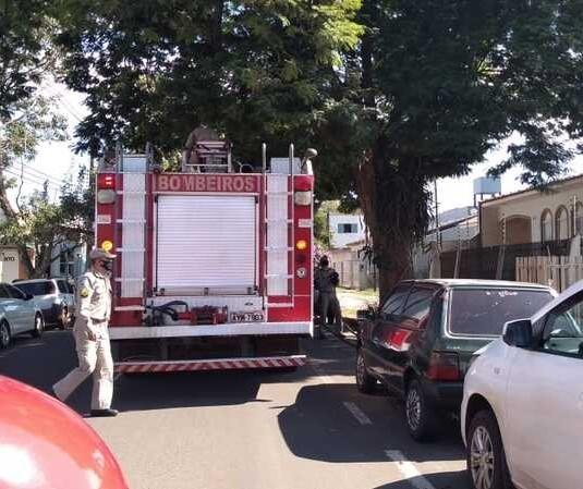 Resgate de arara-canindé mobiliza bombeiros no centro de Maringá