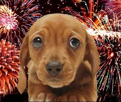 Por que os cães têm tanto medo de fogos de artifício?