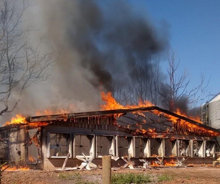 Incêndio destrói granja e mata quase 40 mil frangos
