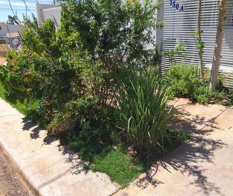 Em Maringá, grupo transforma espaços de calçadas em canteiros para frutas