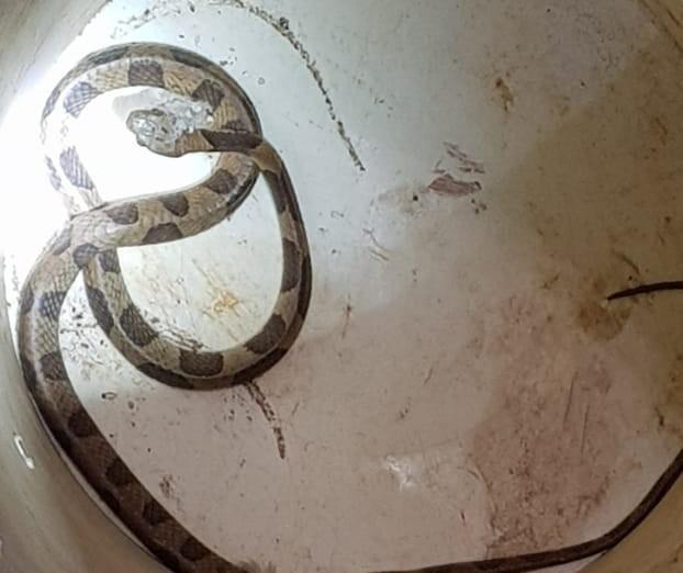 Moradora encontra cobra debaixo de geladeira em Maringá